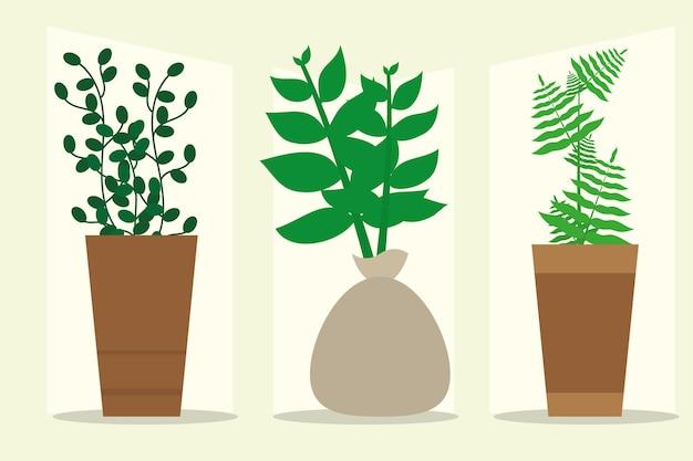 Indoor plants in pot set