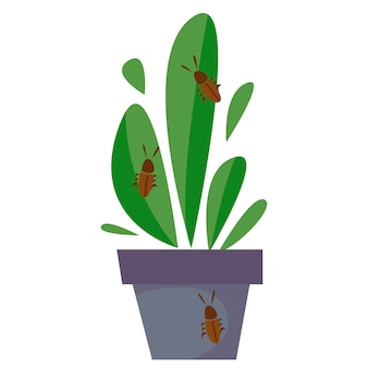Infected home plant. the pest creeps on a flower. vector illustration of a flat style.