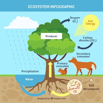 Infographic ecosystem concept with tree