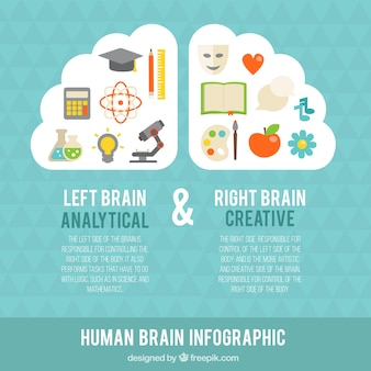 Infographic of human brain with colorful items