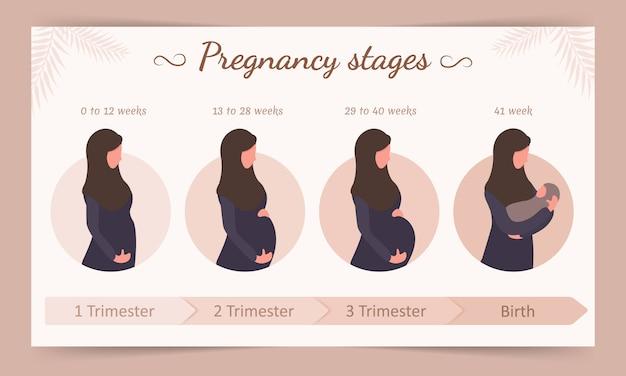妊娠の段階のインフォグラフィック。ヒジャーブのアラブの女性のシルエット。
