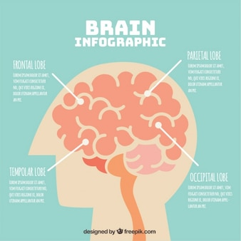 Infographic template of human brain with four options