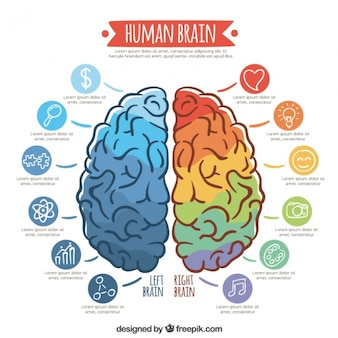 Infographic template of colorful brain