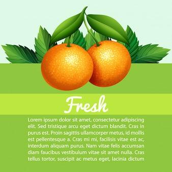 Инфографика со свежими апельсинами