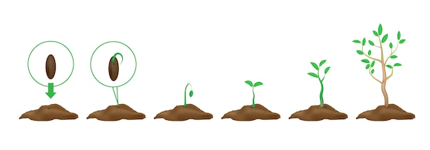 Infographics  of planting plants. stages of growth. green shoots with leaves and ground. sprouted seeds