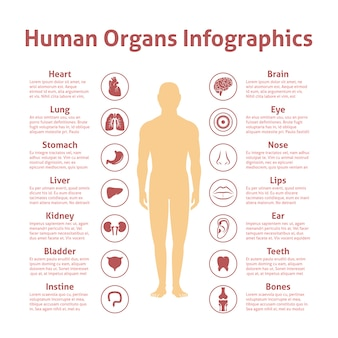 男性の図形のinfographicsと人間の器官のアイコンは、ベクトル図を設定