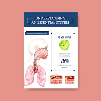 Information about anatomy of the respiratory system and understanding an essential system