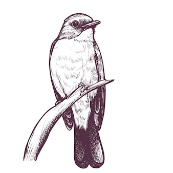 잉크 손으로 그린 flycatcher