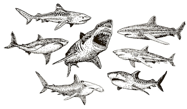 Ink hand drawn shark icon set