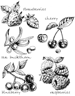 Ink hand drawn sketch style berries set