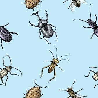 昆虫カブトムシのシームレスなパターン、刻まれた動物の手描きスタイルの背景