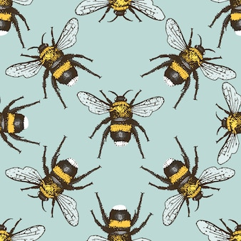 Insect beetle seamless pattern, background with engraved animal hand drawn style