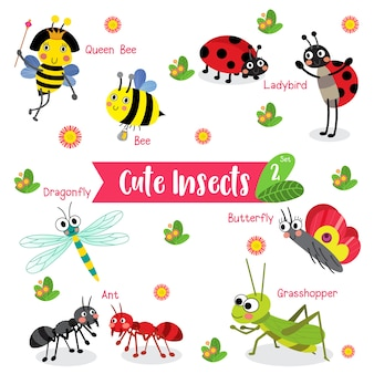 Insect bug animal cartoon