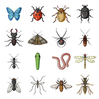 Insect and bug  cartoon set icon.  illustration beetle  .isolated cartoon set icon insect and bug .