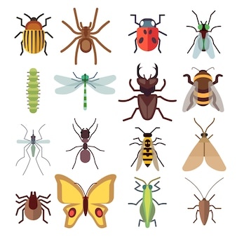Insect flat icons isolated on white background. bug and mosquito, fly and spider. vector illustratio