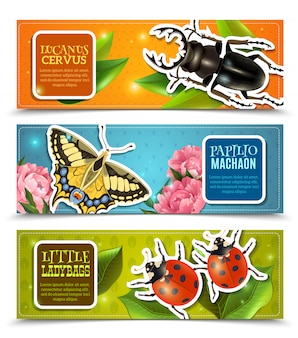 Insects banners set
