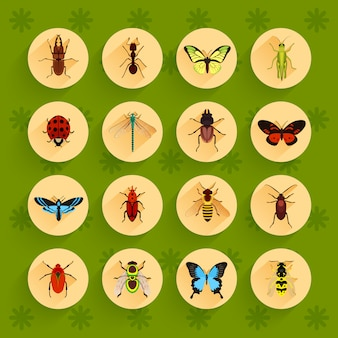 Insects flat icons set