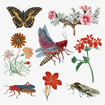 Insects and flowers vector vintage nature illustration, remixed from the artworks by robert jacob gordon