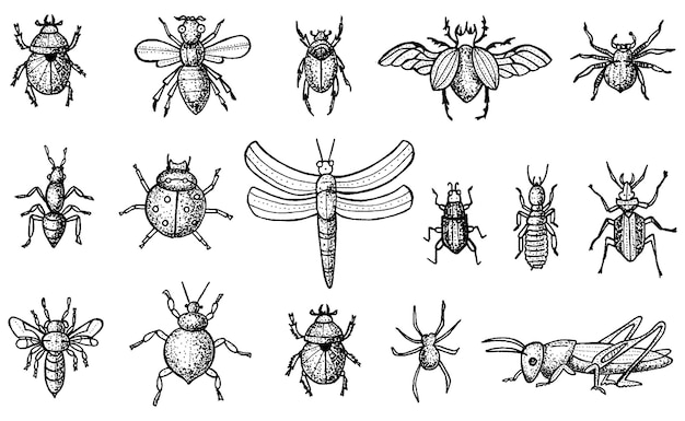 Insects set with beetles, bees and spiders isolated on white background. engraved style.