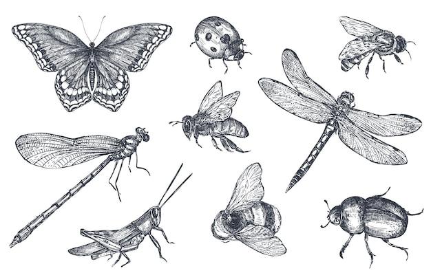 곤충은 잠자리, 파리, 나비, 딱정벌레, 메뚜기로 장식된 아이콘을 스케치합니다. 스케치 스타일에서 손으로 그린 벡터 일러스트 레이 션.