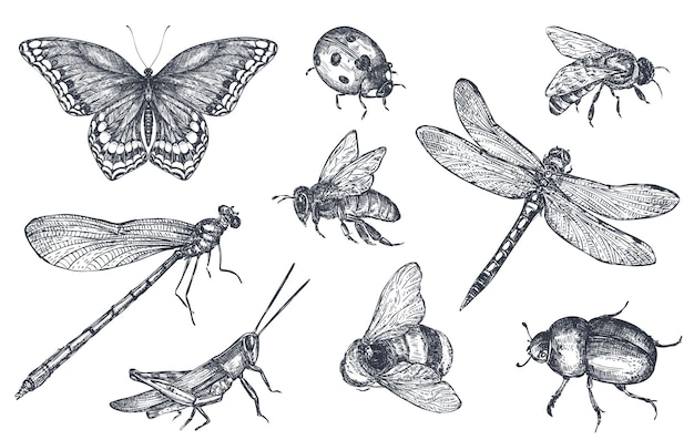 Insects sketch decorative icons set with dragonfly, fly, butterfly, beetle, grasshopper. hand drawn vector illustration in sketch style.