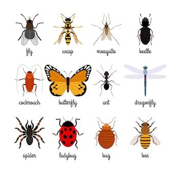 Вектор насекомых на белом фоне