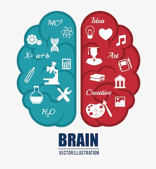 Intelligence of the human brain