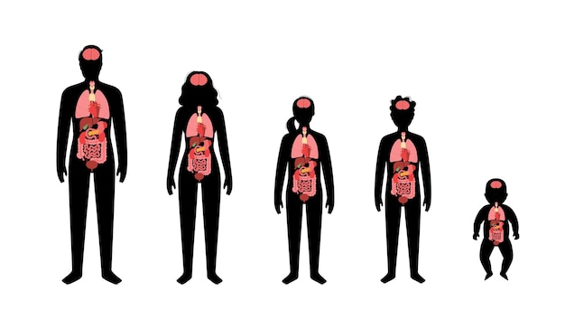 Internal organs in baby, girl, boy, adult man and woman silhouette.