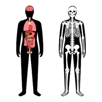 Internal organs and skeleton system in the human body.