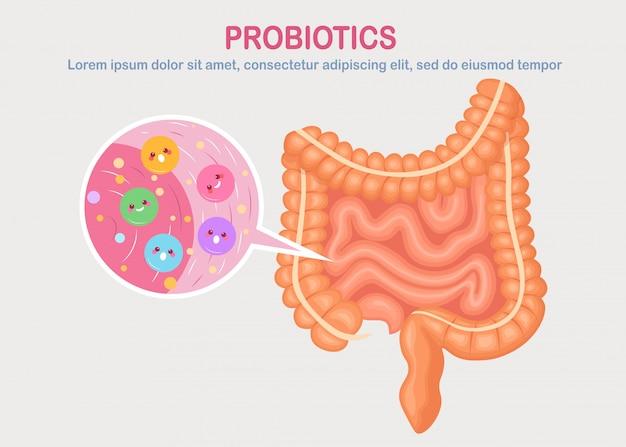 腸、白い背景の上の腸内細菌叢。消化器系、かわいい細菌、プロバイオティクス、ウイルス、微生物を含む路。医学、生物学の概念。結腸、腸