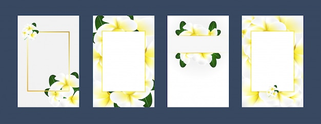 Invitation cards plumeria white yellow background