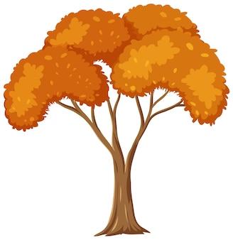 Isolated autumn tree on white background