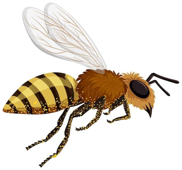Изолированная пчела на белом фоне