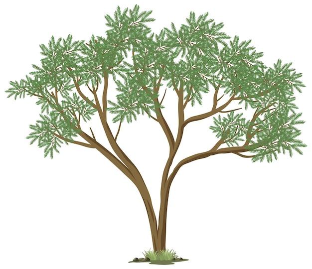 흰색 배경에 고립 된 큰 나무