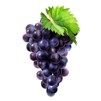 Isolated dark grape with green leaf
