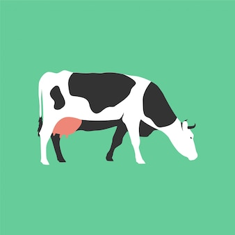 Isolated flat cow