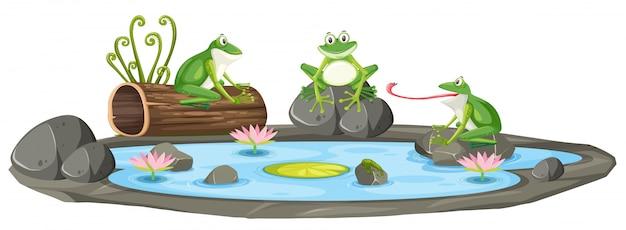 Изолированная лягушка в пруду