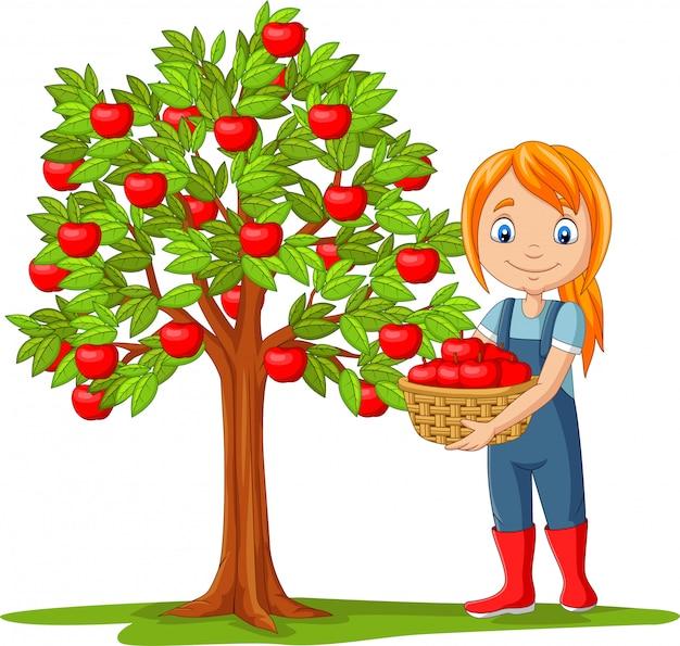 Изолированный фермер девушки собирая яблоки в корзине