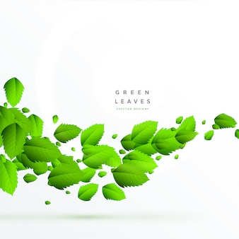 Isolated green leaves floating background