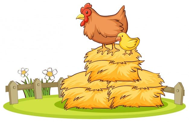 Изолированные рисованной курицы на стоге сена