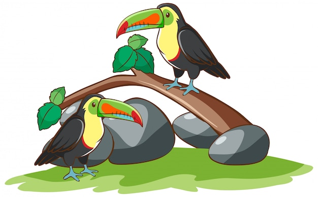 Isolated hand drawn of two toucan birds