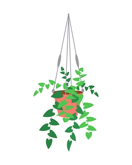 Isolated hanging detailed planter made of cotton cord, potted plants for indoor and outdoor or office, landscape garden.