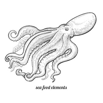 Isolated image octopus