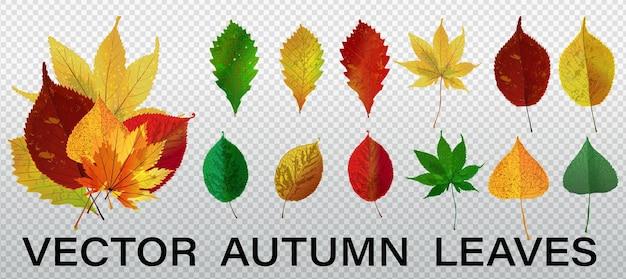 Изолированные листья векторный набор. осенняя природа декор. осенние листья падают графический дизайн.