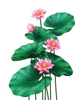 중국 또는 인도 식물 이집트의 흰색 분홍색 꽃에 꽃과 꽃 봉오리와 격리 된 연꽃 잎