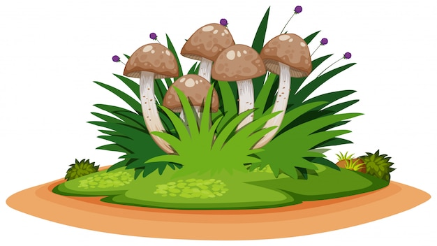 Isolated mushroom and plant
