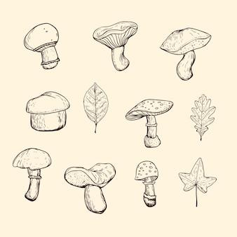 고립 된 버섯과 단풍 흑백 이미지