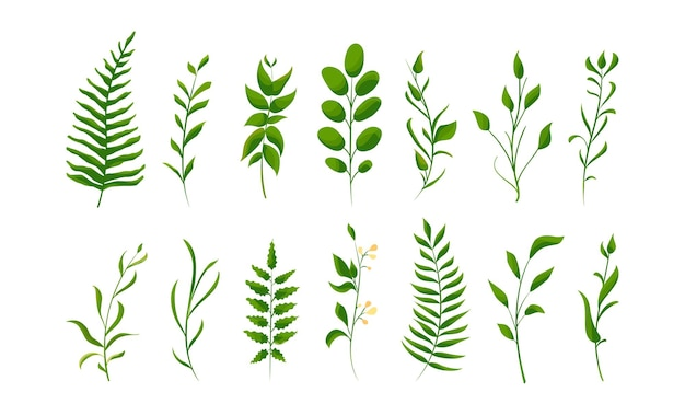 Isolated natural leaves. big set collection of green forest fern, tropical green.