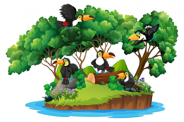 Isolated nature island with toucan