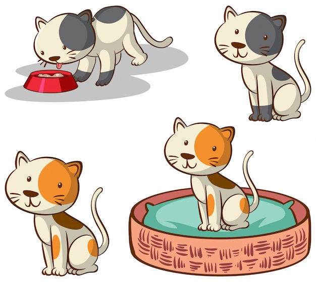 Isolated picture of cats in different poses